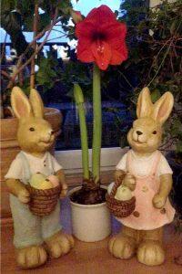 Alles Gute, nur das Beste, gerade jetzt zum Osterfeste! Möge es vor allen Dingen: Freude und Entspannung bringen! Handyfoto: Gesa Niebuhr