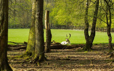 Tierpark Fasanerie Wiesbaden, Lebensraum der Tiere. Foto: Volker Watschounek