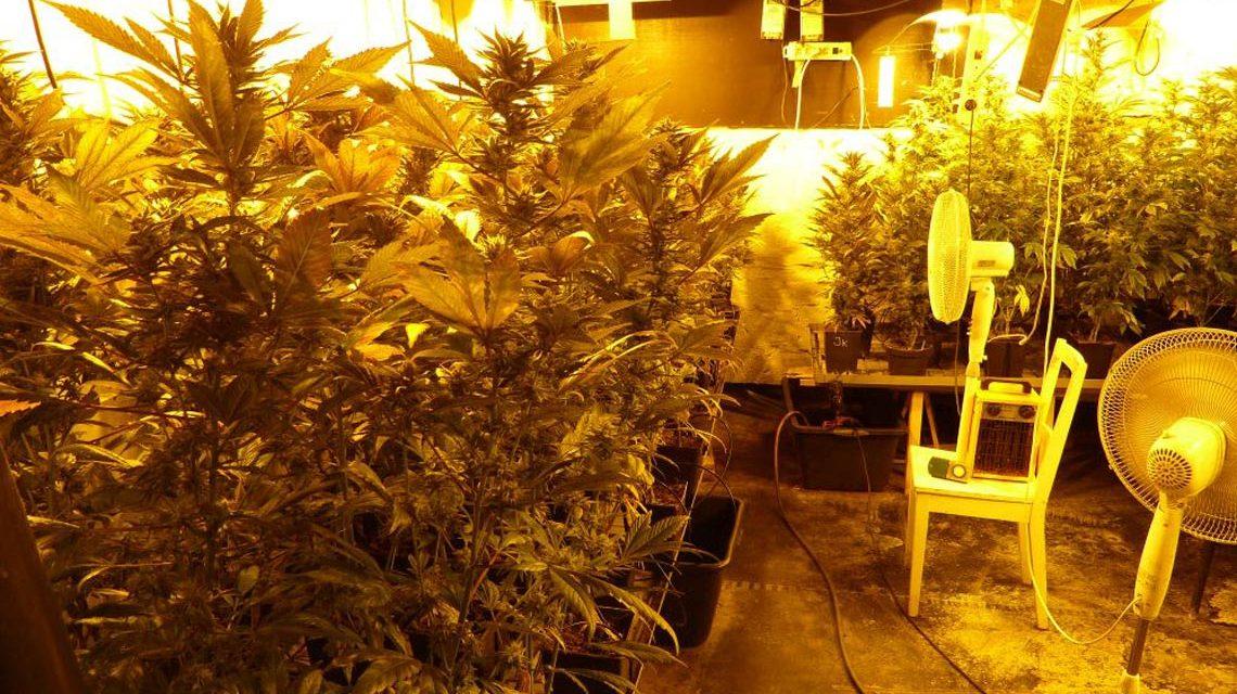 Geruch von Marihuanapflanzen führte zu Tätern. Bild: Polizei