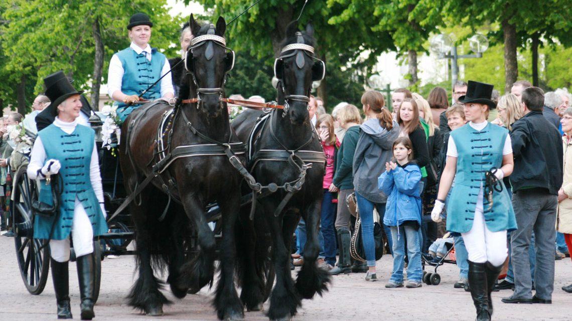 Stolz ziehen die zwei Friesen die Kutsche über die Allee. Bild: Olifer Neuhof