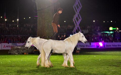 Der Franzose Pierre Fleury mit seinen Highland-Ponys aus der Normandie beim 81. Internationalen Pfingstturnier. Bild: Volker Watschounek