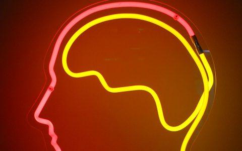 Schemafte Abbildung und Lage des Gehirns. Bild: Flickr / CC-BY / Dirk Schaefer
