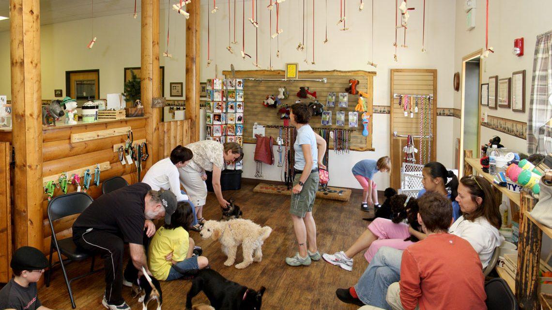 Hundekindergarten oder zufälliges Treffen vieler Hundehalter? Bild: Andrew Magil / Flickr / CC-BY