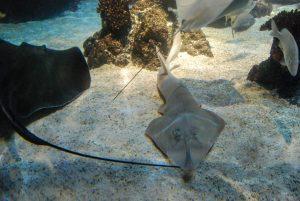 Meeresforschung einmal anders. Unterwasserwelt im Sealife Hannover 2008. Bild: Volker Watschounek