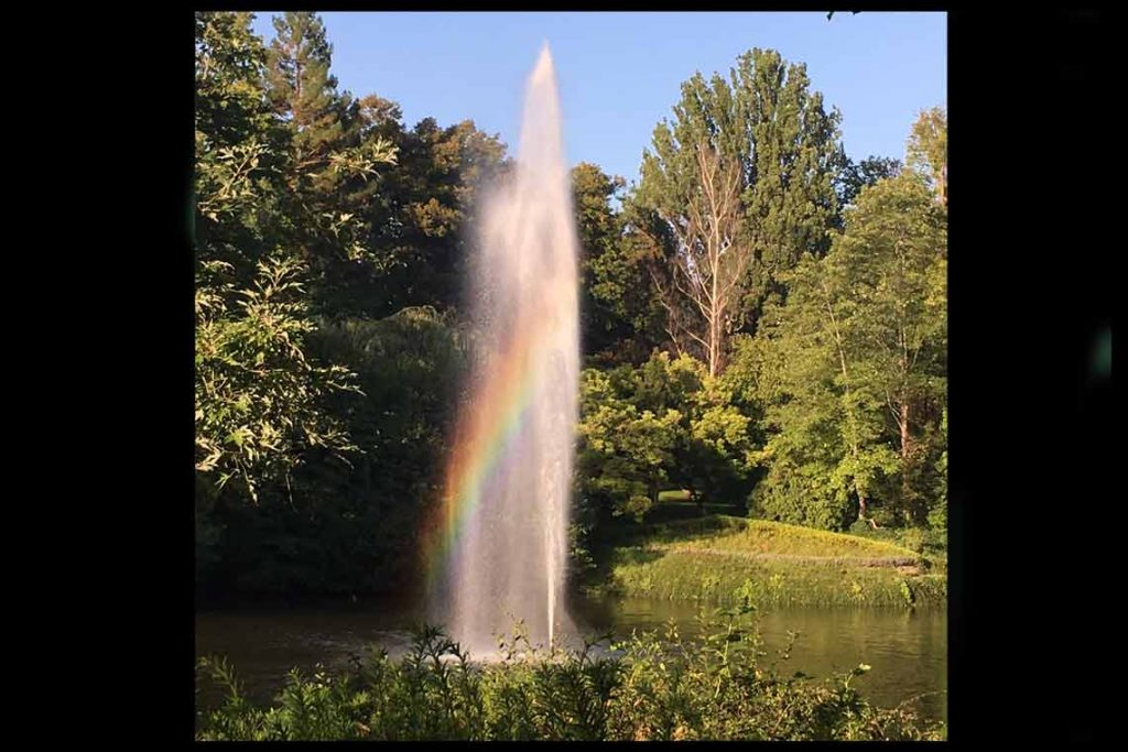 Ein zauberhaft magischer Moment im Wiesbadener Kurpark, mitten in der Stadt. Einfach märchenhaft schön! Bild: Ingrid Tonn-Euringer