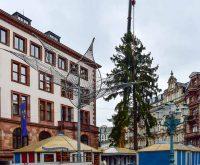 Wiesbadens Weihnachtsbaum steht – und wird ausgerichtet. ©2017 Volker Watschounek