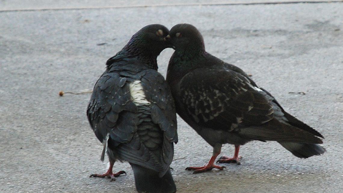 Turtelnde Tauben von Margaretha Rebecca Hopfner @2018 Flickr