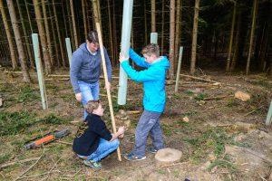 Die Linde war der Baum des Jahres 2016. Am Klellerskopf renaturieren Schüler der Kellerskopfschule gerodete Flächen. ©2016 Volker Watschounek