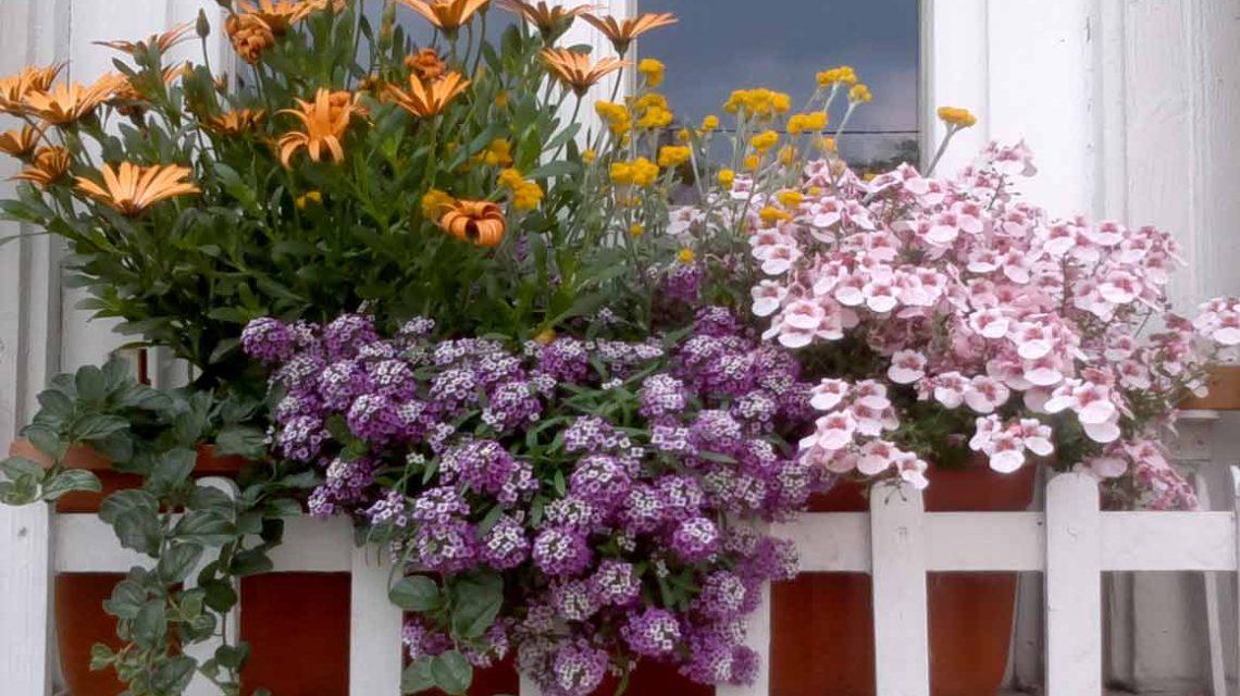 Insektenreich Blumenkasten. ©2018 Imkerverein Wiesbaden
