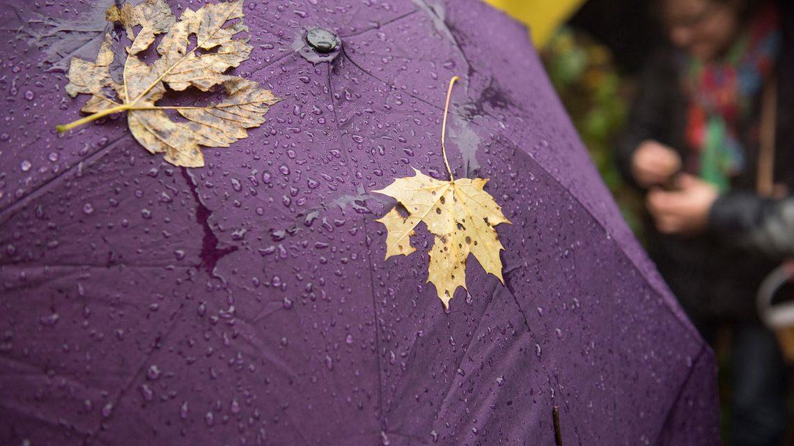 Laub und Regen repräsentieren Herbstwetter... Im Moment herrscht Frühlingswetter. © 2018 Museum Wiesbaden