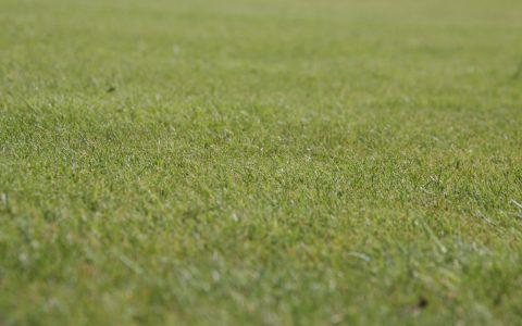 Rasen, aufgenoimmen von Malte Hampel. ©2018 Flickr / Malte Hampel / BY-SA-2.0