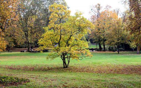 Herbst in Wiesbaden, wo Sie Naturmaterialien sammeln, ist ganz gleich. ©2018 Volker Watschounek