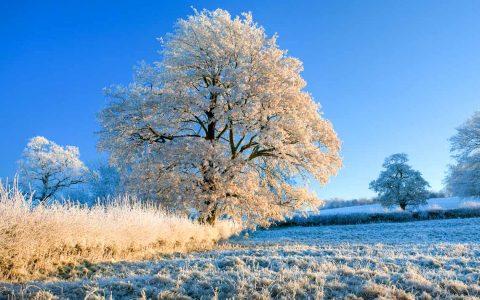 Es wird eisig. Der Winter macht ernst. ©2019 WetterOnline