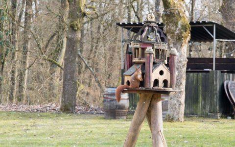 Das Eichhörnchen hat es sich bequem gemacht. Wann es wohl einzieht? ©2018 Volker Watschounek