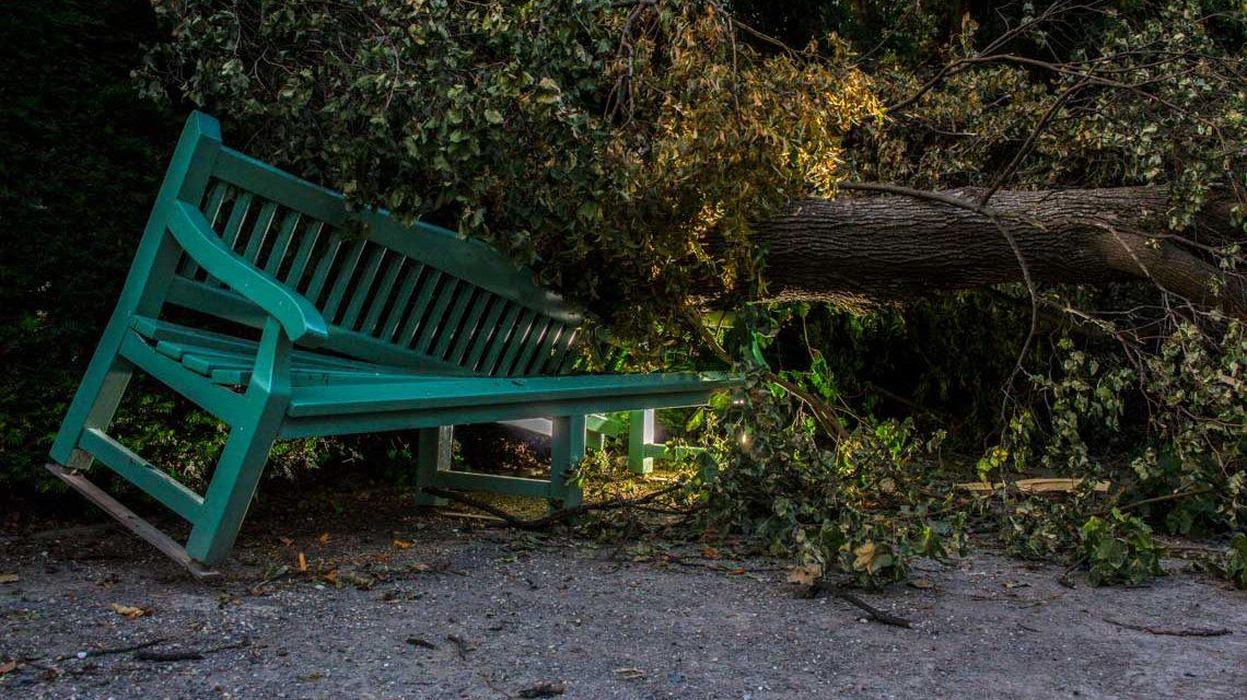 Archivbild: Sturmschäden im Park. ©2019 Flickr | A.M.D. | BY-SA 2.0