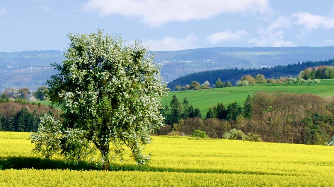 Frühlingswald, die Natur erwacht. ©2019 Norbert Reimer   Flickr / CC-BY-SA-20