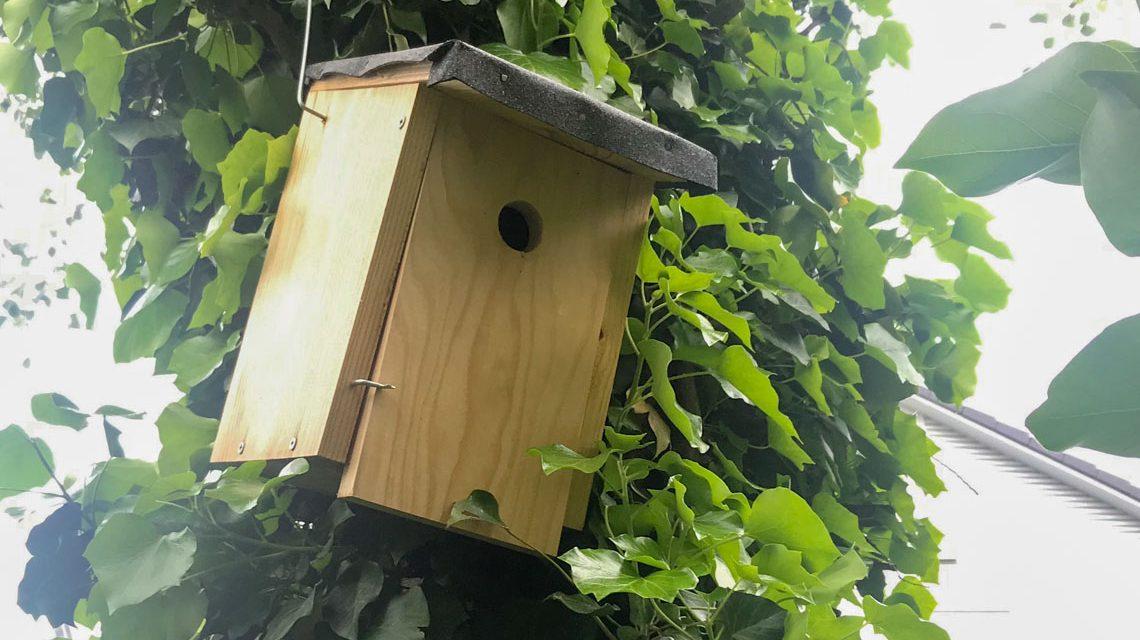 Vogelhaus, Artenschutz fämngt im Garten an. ©2019 Volker Watschounek